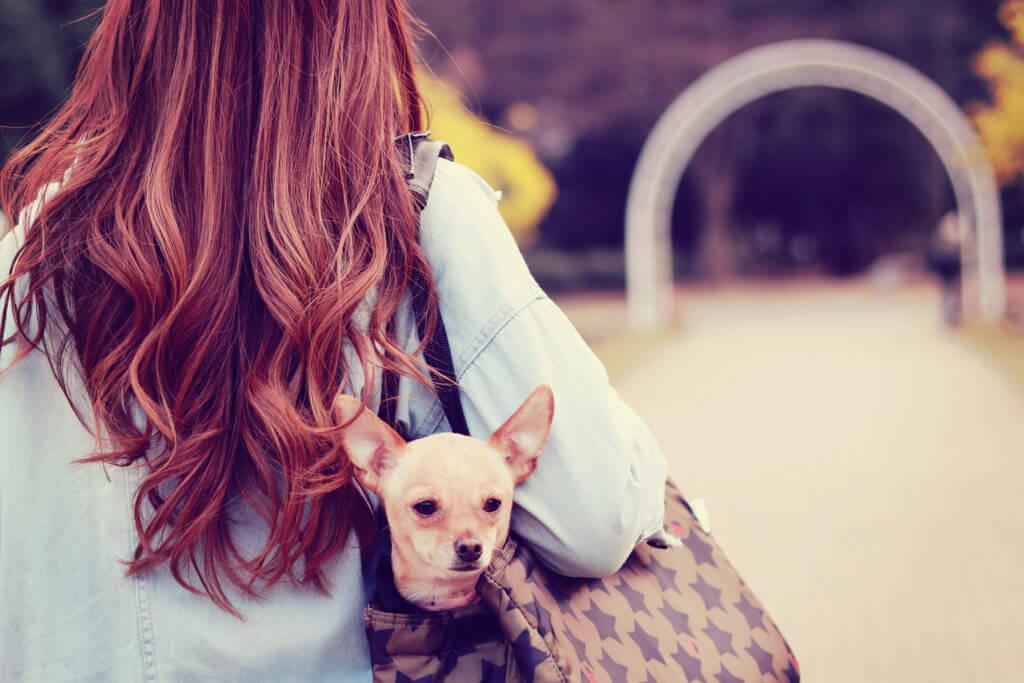 犬を連れて一人で歩く女の子